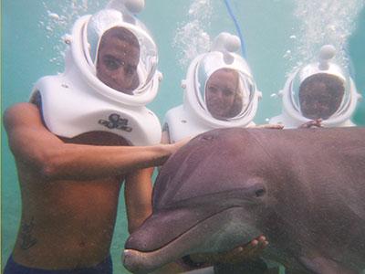 Dolphin Cove Ocho Rios Dolphin Trek Dolphin Trek