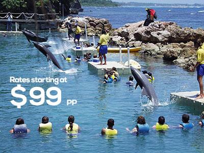 Dolphin Cove Ocho Rios With Rate Dolphin Cove Ocho Rios