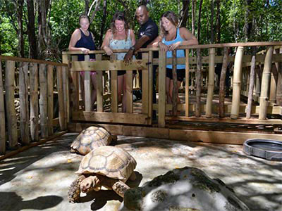JamWest Adventure Park Safari Tour.JPG Rock Safari Tour