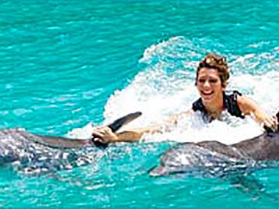 Ultimate Dolphin Royal Swim